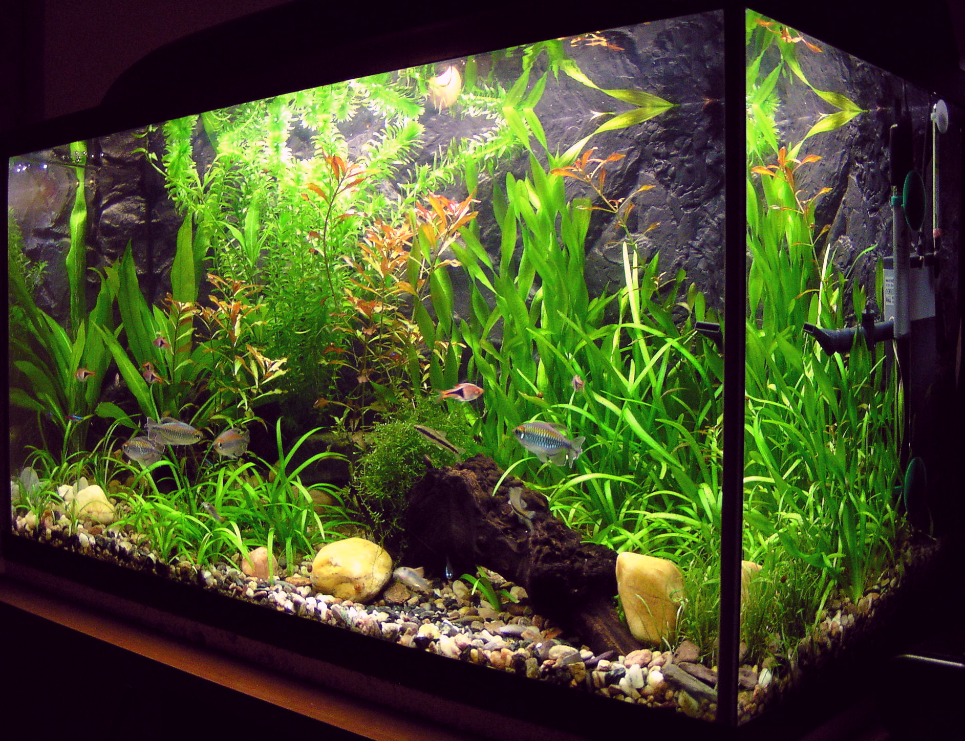 The Way To Start Fish Aquarium With Lower Than $1 hundred